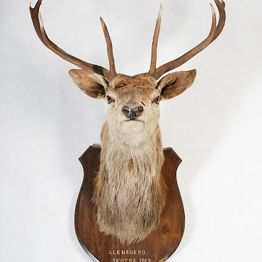 An early 20th century taxidermy Stags head, sold for £380