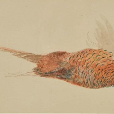 Lot 176A. Attributed to Jospeh Mallord William Turner RA (1775-1852) Dead Pheasant, watercolour, £2,000-3,000, sold for £14,000